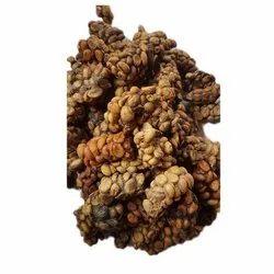 Civet Coffee Beans