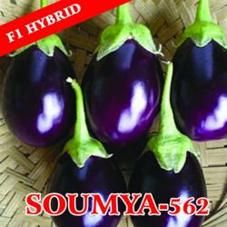 Rajani Seeds F1 Hybrid Brinjal Seed