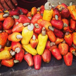 Cashew Fruits and Dry Fruits