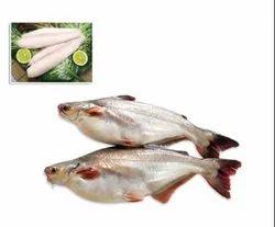 IQF White Pangasius Fish