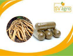 Shatavari Extract Capsule