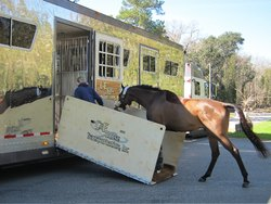 Horse Transportation Vehicle