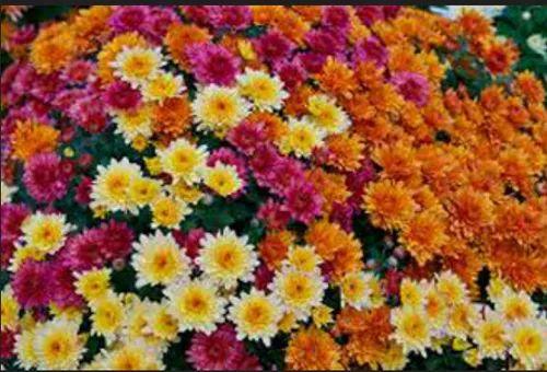 Fresh Flowers Lotus Flower Retailer From Vijayawada