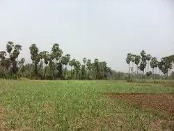 80 Acres Land  in Bhogapuram International Airport