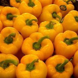 Yellow Fresh Capsicum
