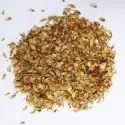 Casuarina Equisetifolia Seed