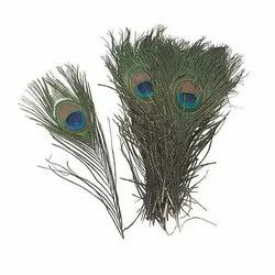 Birds Feather at Best Price in India