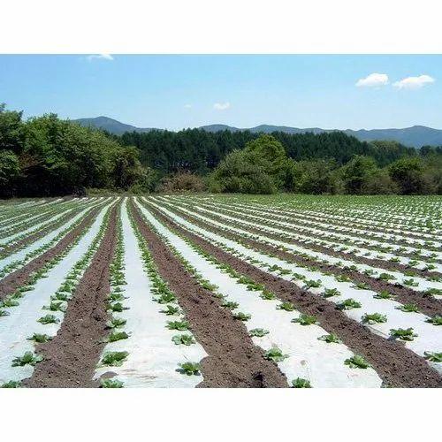 Watermelon Farm Pictures