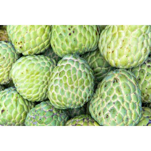 Picture Of A Sugar Apple