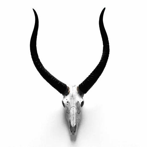Animal Skull Wall Decor