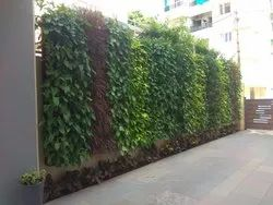 Green Wall Services