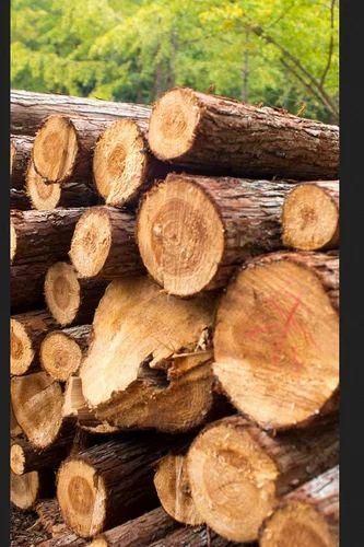 Timber, इंडियन टिंबर | KUNDAN RICE MILLS LIMITED