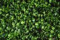 Vertical Grass