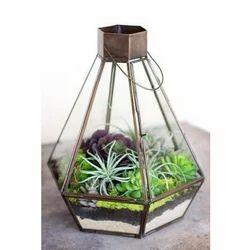 Glass Terrarium Boxes At Rs 200 Piece Terrariums Id 15960671812