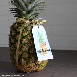 Pineapple Cold Storage Rental Services