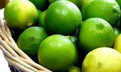 Fresh Lemon from Farms