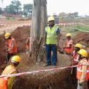 Tree Transplant Service
