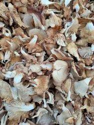Oyster Mushroom Madhya Pradesh Oyester Dry Mushrooms, Packaging Type: Carton