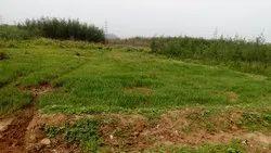 65 Acres Industrial Land For Sale Kothavalasa ,Visakhapatnam Rs:65,000,00/- Per Acre