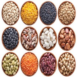 Many Indian Pulses, Gujarat