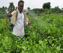 Spray Herbal Pest Control Service