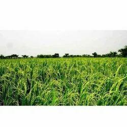SBT Plant Growth Stimulant, Can,Drum