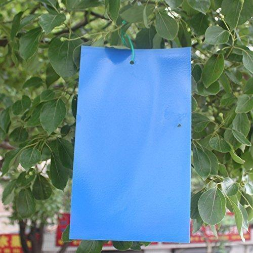 Plastic Blue Sticky Trap, Packaging Type: Plastic Sheet