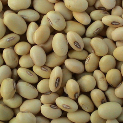 Organic Indian Soya Beans, High in Protein, Packaging Size: 50 Kg, 100kg