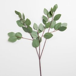 Eucalyptus Leaf Extract, Pack Size: 1 - 5 kg, Packaging Type: Packets