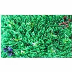 Mat M-5 Artificial  Wall Grass