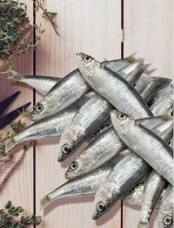 Sardines Mathi Chala Fish