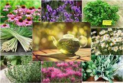 Ayurvedic Herbal Franchise in Araria- Bihar
