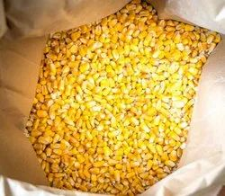 Yellow Indian Corn, Speciality: Organic
