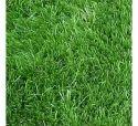 American Lawn Grass