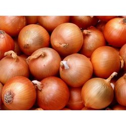 Maharashtra Store in Dry Place Fresh Yellow Onion, For Human Consumption