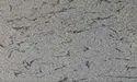 Franch White Granites Stone