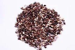 Napier Grass Seeds, Elephant Grass Seeds, Pennisetum Purpureum Grass Seeds