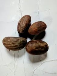 Bitter Kola - Kola Nut Latest Price, Manufacturers & Suppliers