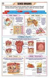 Sense Organs For Zoology Chart