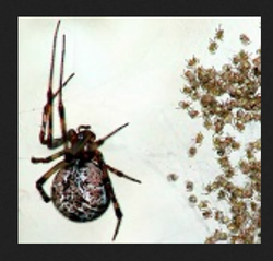 Spiders Control Services