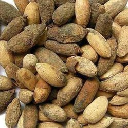 Neem Seed for cultivation