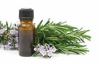 Organic Ambrette Seed Oil