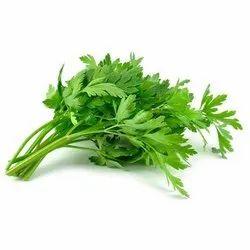 Celery Vegetable Seeds