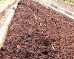 wormcompost manufacturers