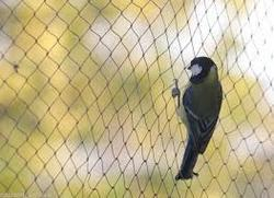 Bird Net (Get Rid From Pigeon Problem)
