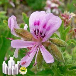 Geranium(Egypt) Oil Certified Organic