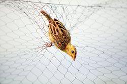 Anti Bird Safety Net