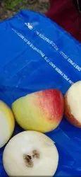 Seedless Apple Ber Plants