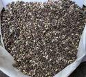 Napier Grass Seed Co4