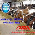 GCC for Animal Feeds